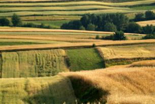 Ponidziańskie pola