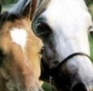 Ludowy klub jeździecki w Pińczowie